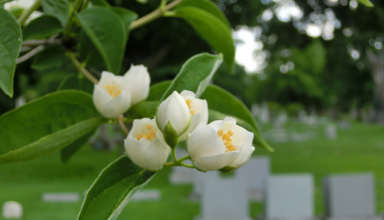 Tiny flower buds macro in cemetery with tombstones - color photo